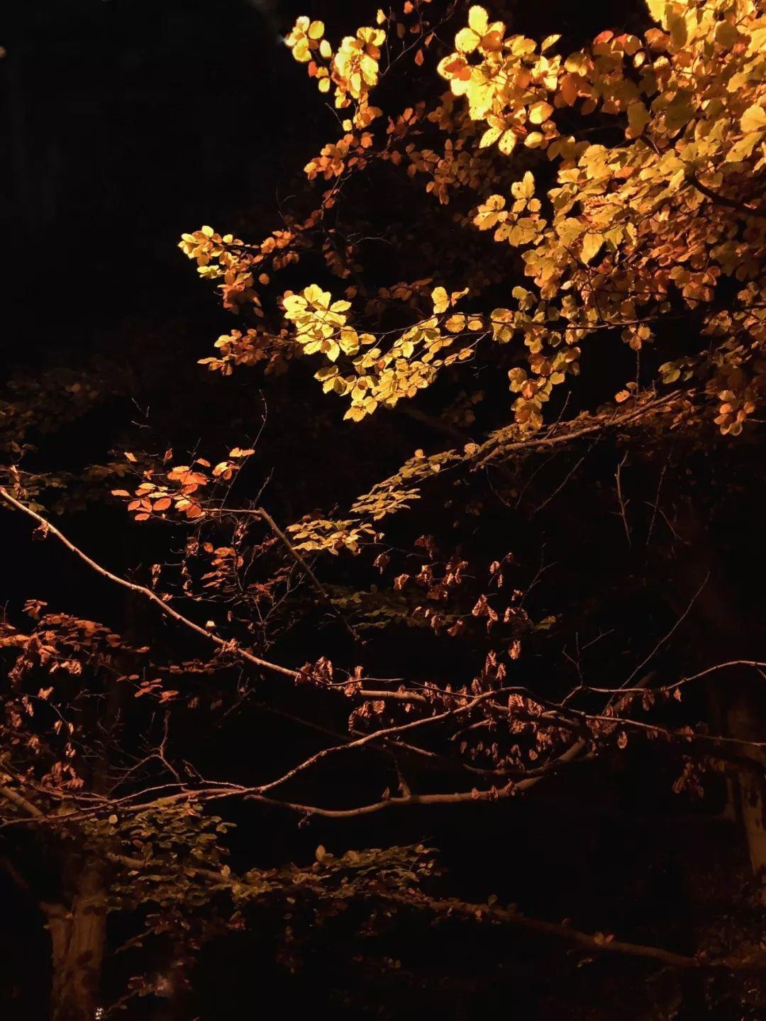 【摄影大赛】剑桥中国学联第三届摄影大赛「光语」获奖作品揭晓啦!